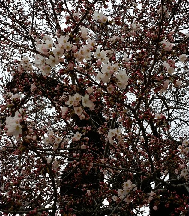 2015-3-29_19-43-47_No-00.png
