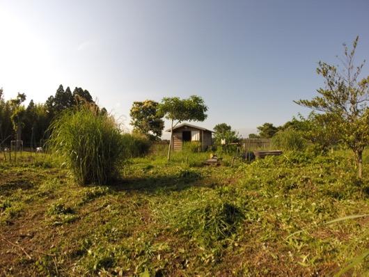 garden20150606 - 7