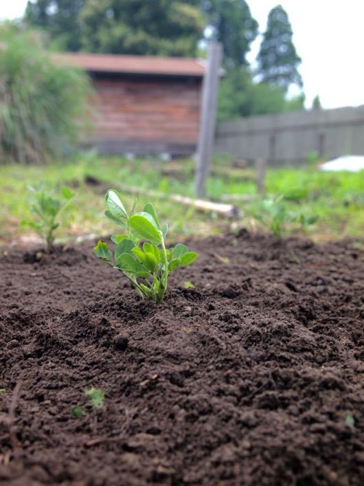 garden20150614 - 6