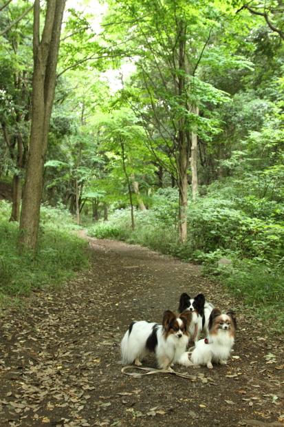 IMG_8753四季の森四季の森