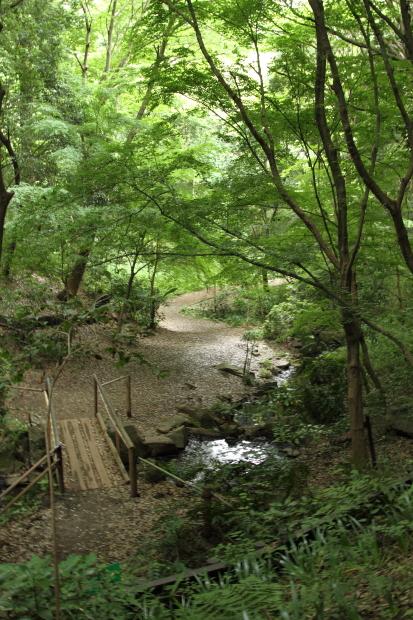 IMG_8756四季の森四季の森
