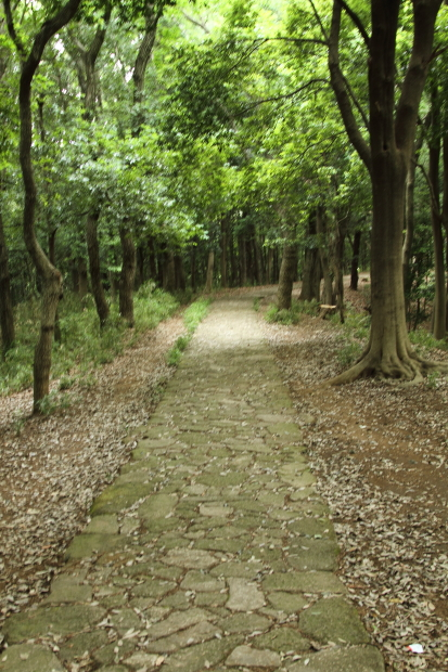 IMG_8758四季の森四季の森
