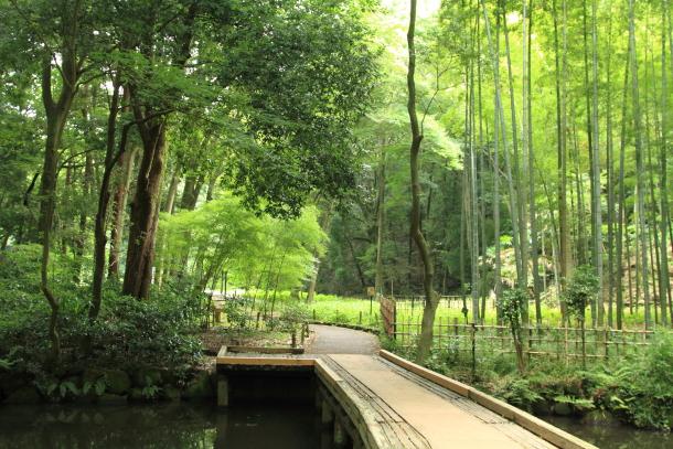 IMG_9250森林公園森林公園