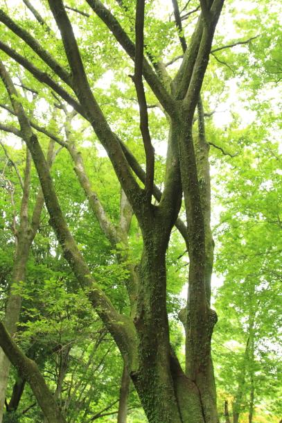 IMG_9251森林公園森林公園