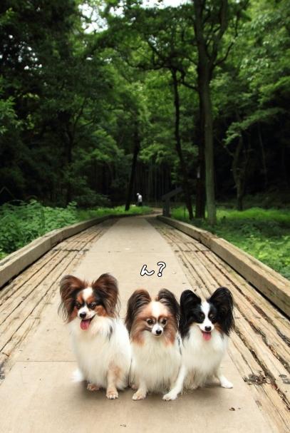 IMG_9241森林公園森林公園