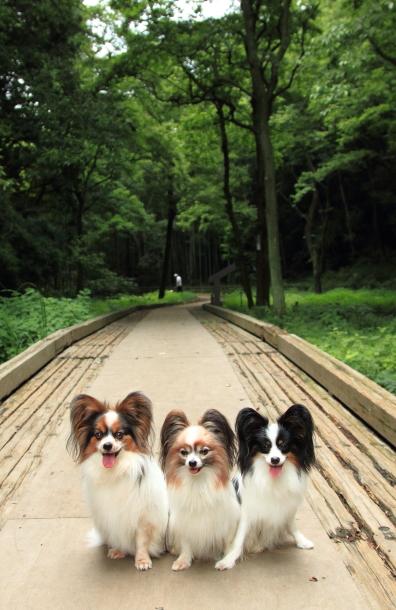 IMG_9242森林公園森林公園
