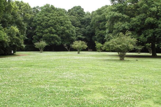 IMG_9258森林公園森林公園