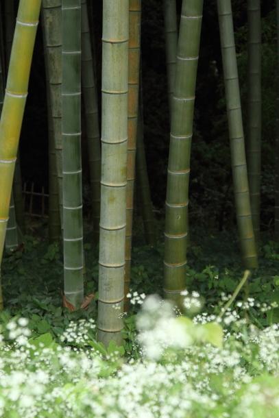 IMG_9293森林公園森林公園