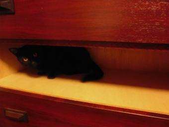 タンスの猫3