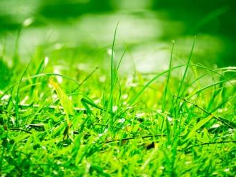 鮮やかな色の草