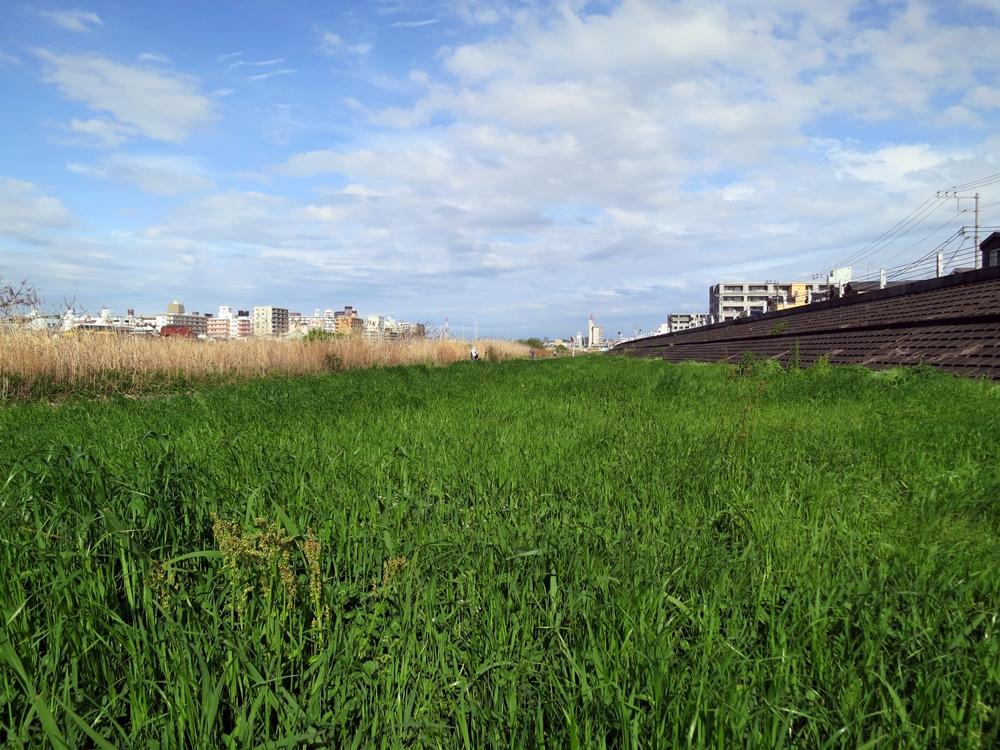 雑草の生長