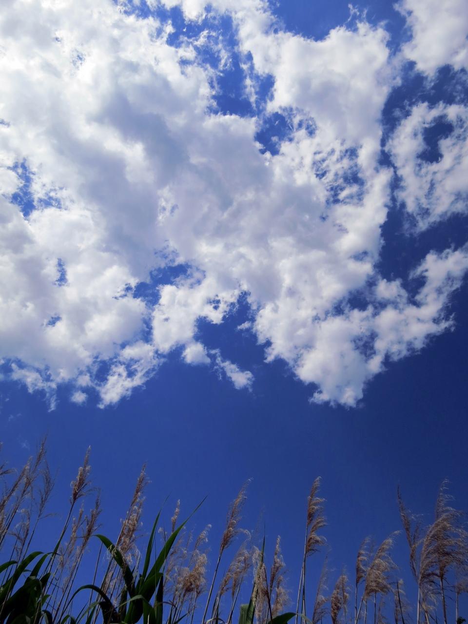 6月初旬の青空