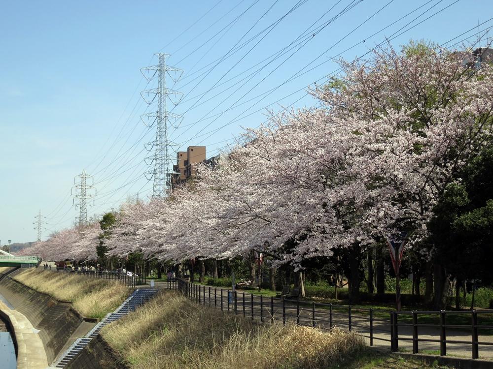 150330桜-02
