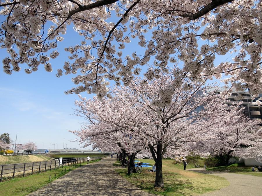 150330桜-05