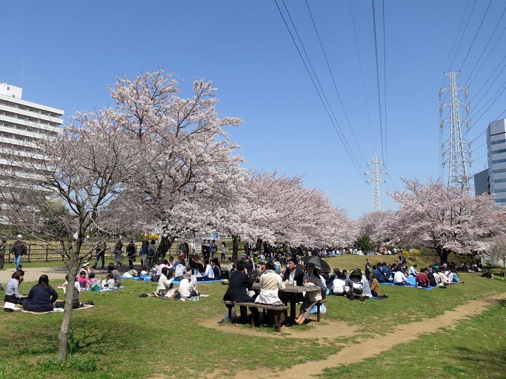 150330桜-10