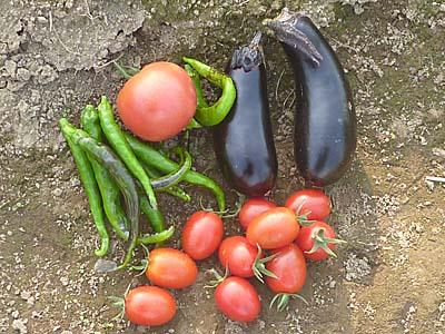 収穫した野菜 トマト、なす、ししとう 6/17