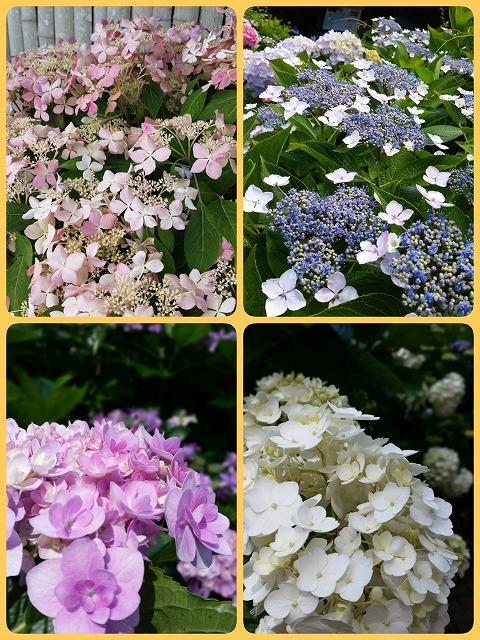 2015-06-07-14-54-23_deco.jpg
