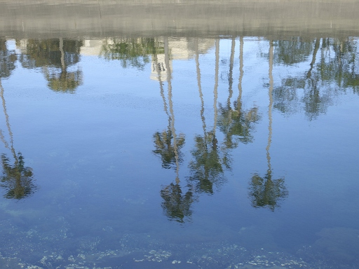 春の水@鹿児島
