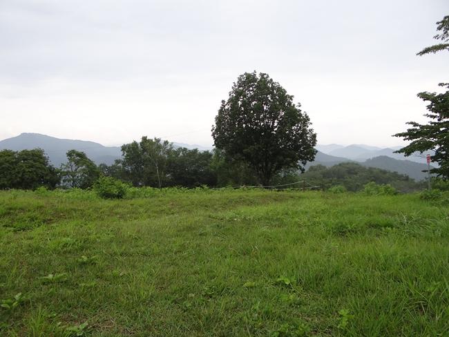 g 山頂直下の草原