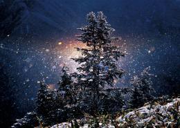 光と愛の感謝日記 地球の気持ち