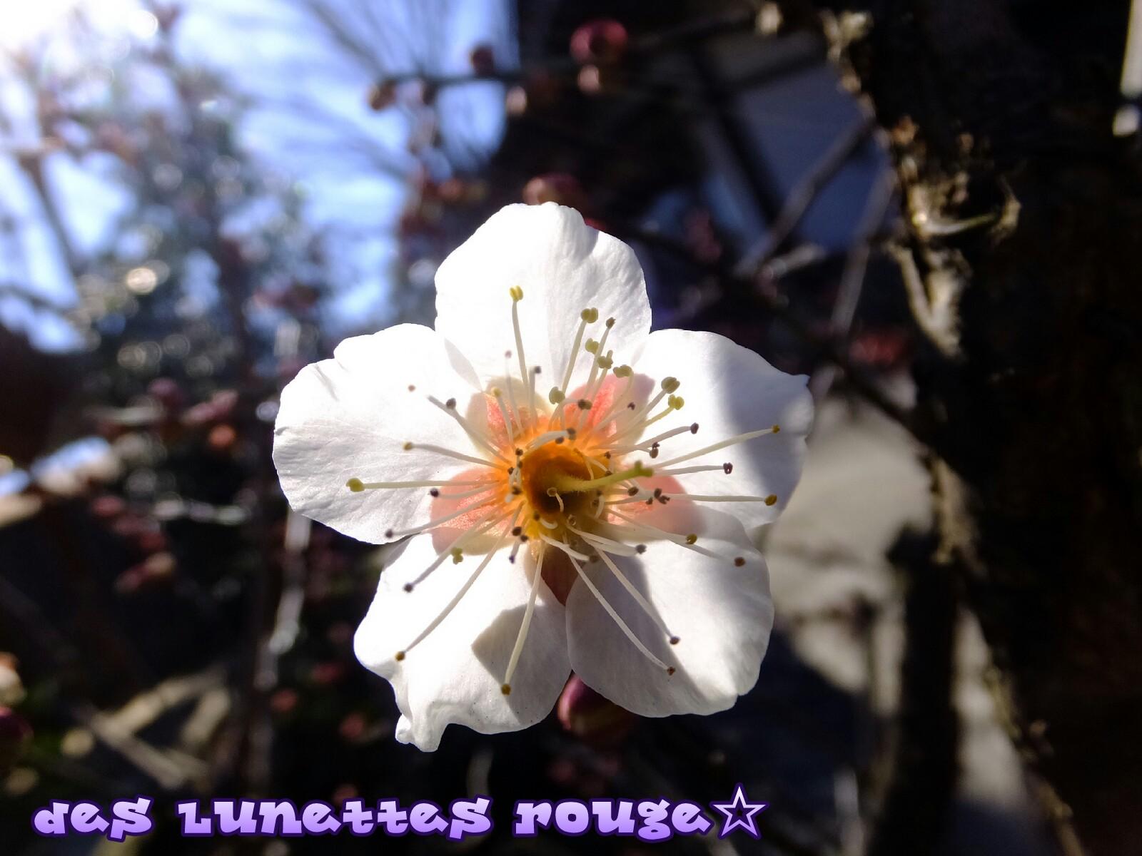 梅? 桜?