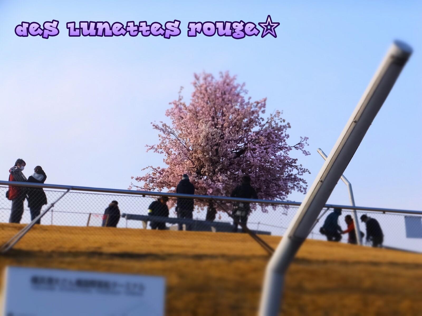 くじらの背中に桜?