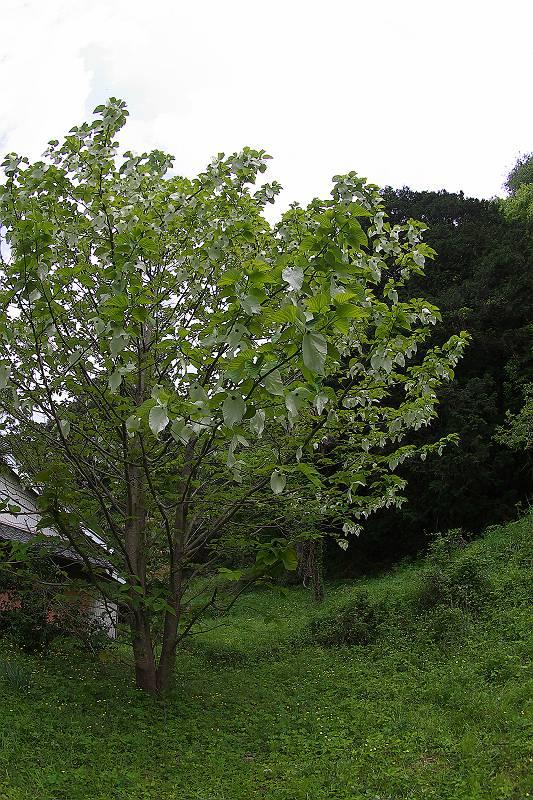 P4293375-m.jpg