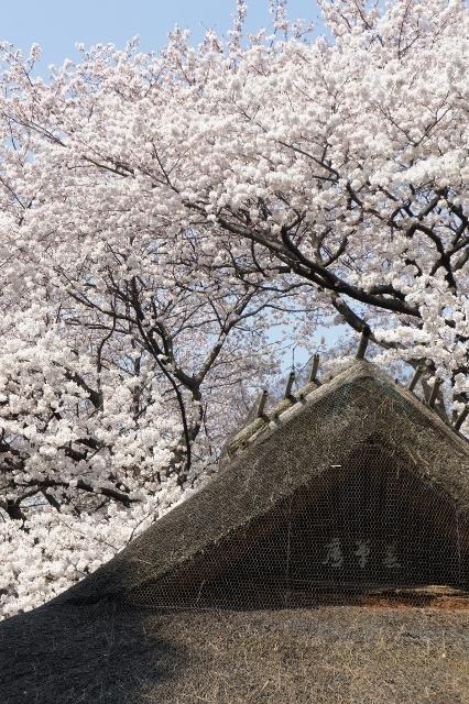 上野国立博物館 ①