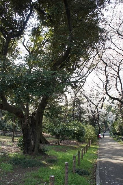 上野国立博物館 ②