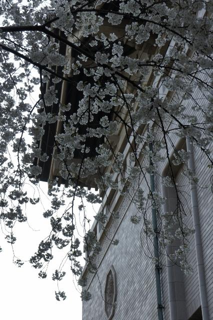 上野国立博物館 ⑨