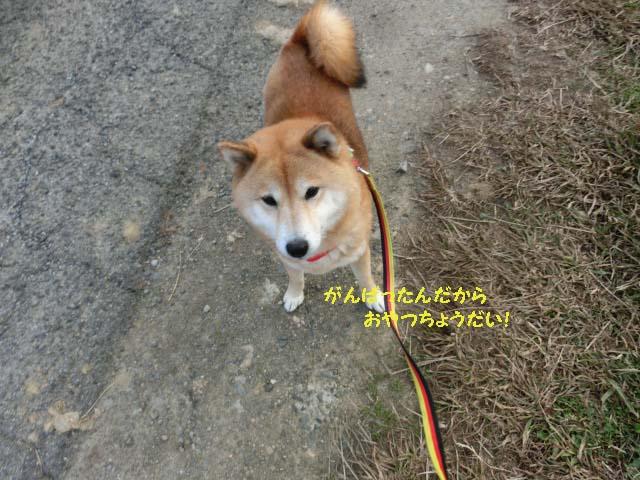 saisoku150113 のコピー