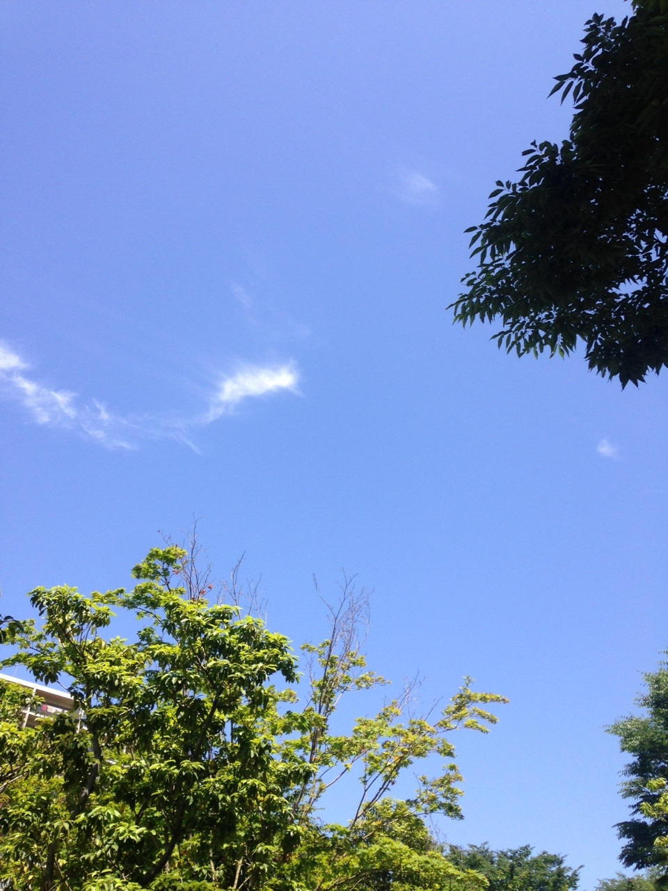 blue sky1