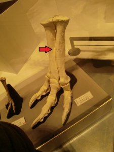 ティラノサウルス科 - Ancient R...