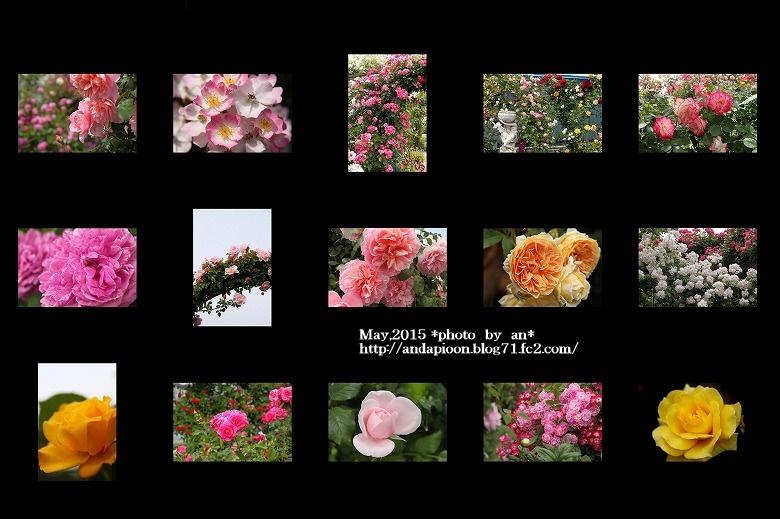 薔薇②5・11