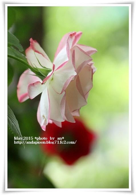 20150515 IMG_0883