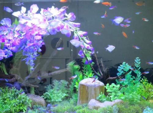 fish hospital040415 (1)