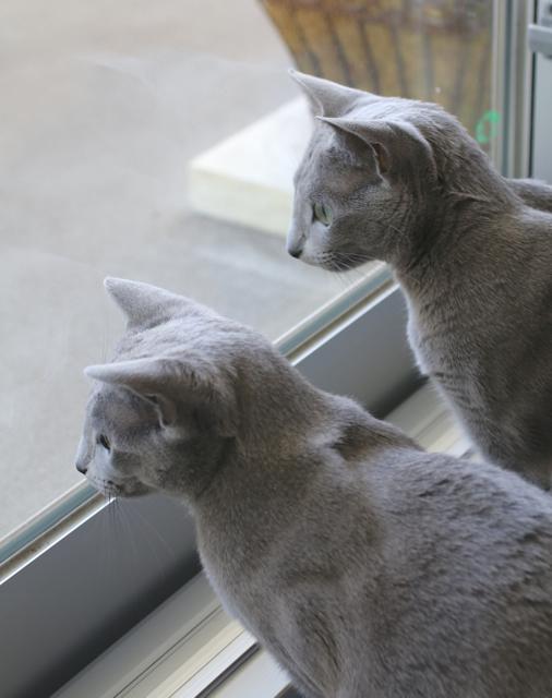 窓辺アップ