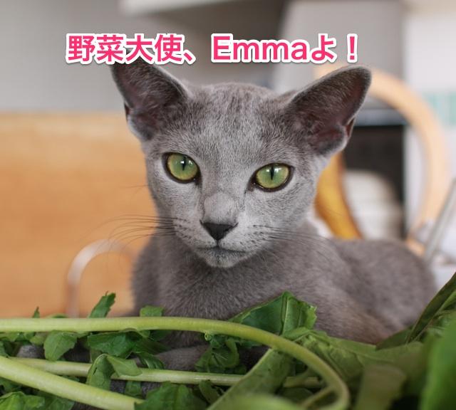 エマ野菜大使