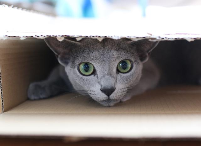 エマ、箱の中