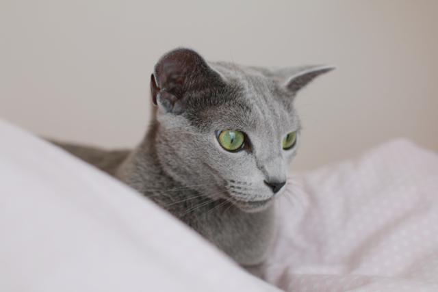 エマ、ベッドの上