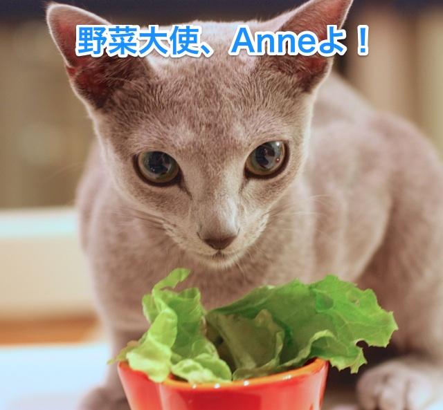 アン野菜大使
