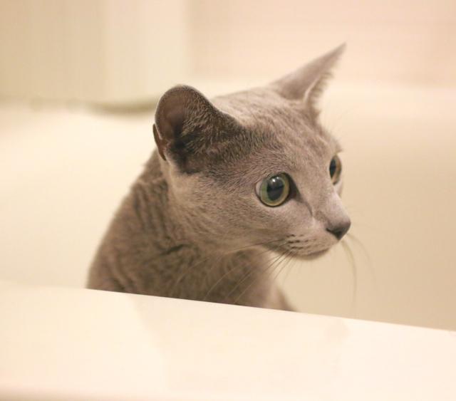 お風呂場アン
