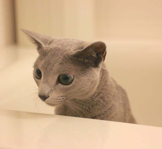 お風呂場アン2