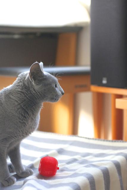 テレビ観る