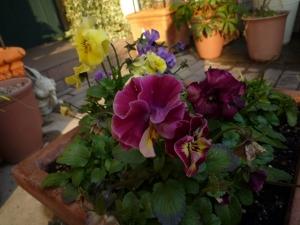 春の庭2015_3