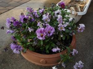 春の庭2015_4