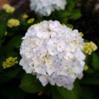fc2blog_20150523165550b6f.jpg