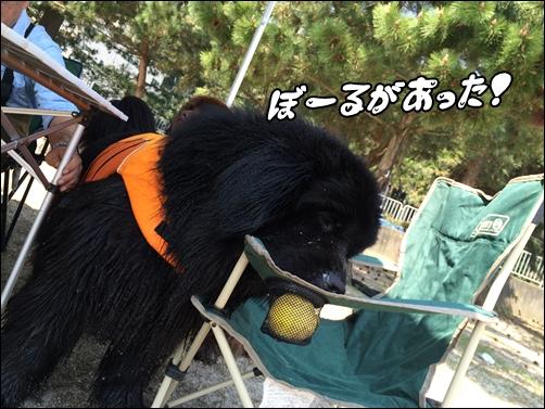 20150427__IMG_8968.jpg