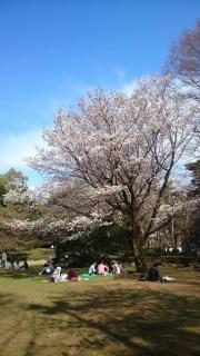 この木はかなり立派に咲いてたな