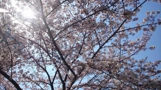 咲いとるー!